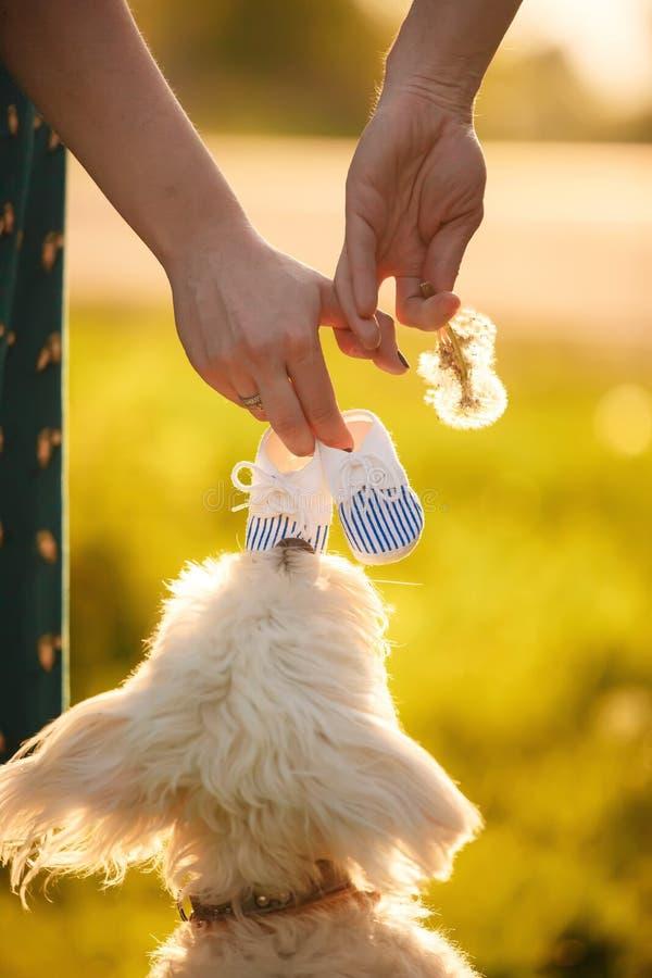 Halten Sie Hände Zukünftige Familie weißer Hund bei Sonnenuntergang lizenzfreies stockfoto