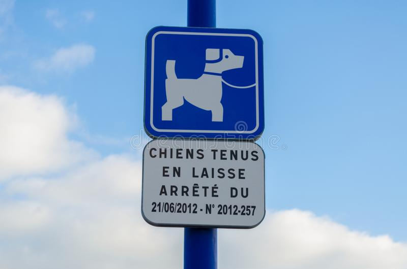Halten Sie Hunde auf Bleiarten stockfotografie