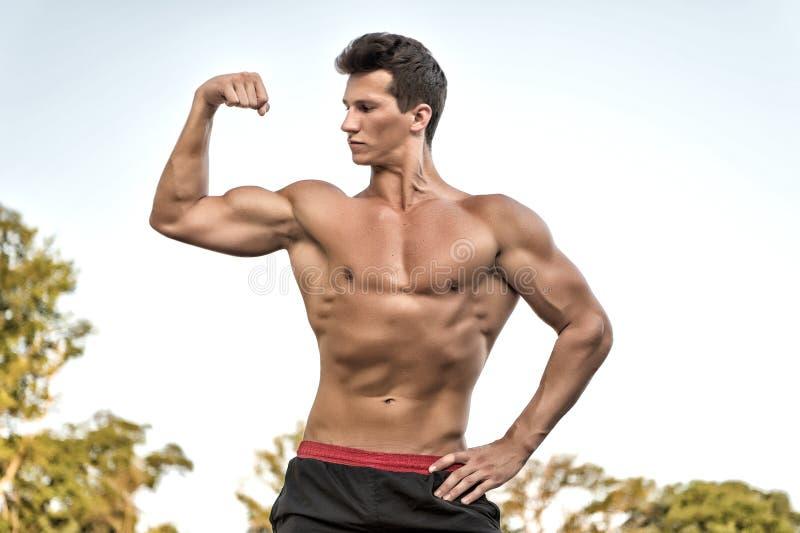 Halterofilista que mostra os músculos, o bíceps e o tríceps foto de stock
