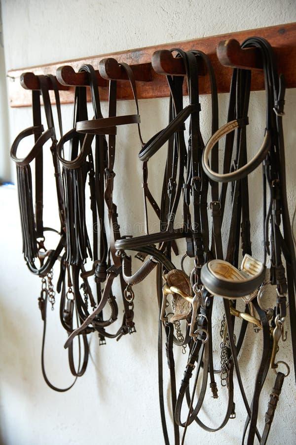 Halterszäume Kopfbedeckung des Pferdereißnagels in Folge lizenzfreie stockbilder