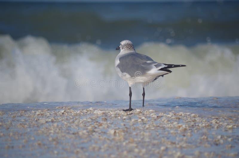 Halv down: en seagull royaltyfria bilder
