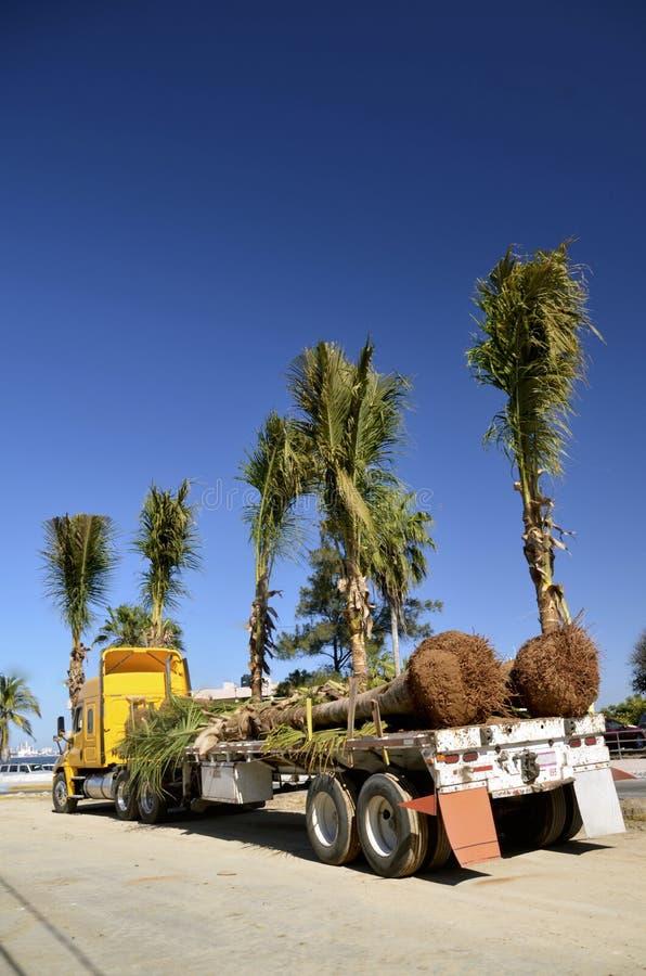 Halv plan säng som laddas med palmträd arkivfoto