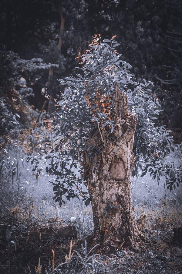 Halva cutted träd med växande nyligen sidor royaltyfri fotografi