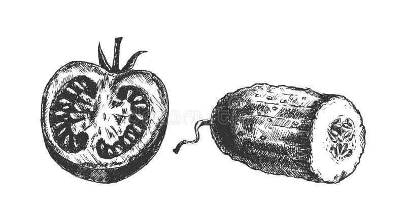 Halva skivor av tomaten och gurkan royaltyfria foton