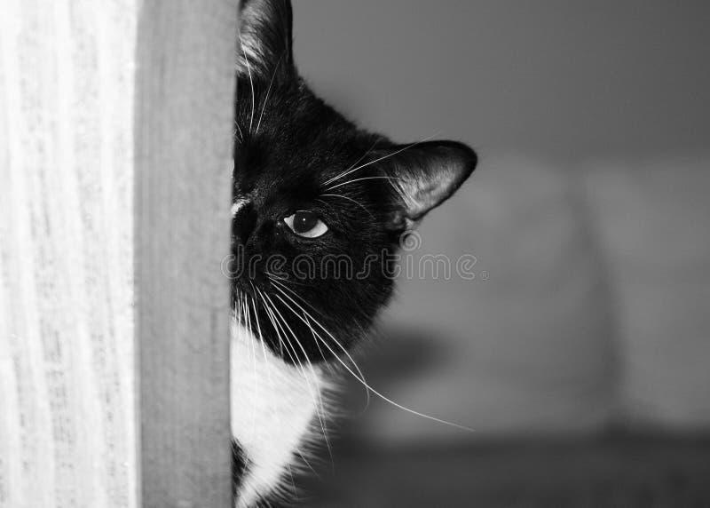 Halvan av tystar ned av svartvit katt kikar ut ur hörnet och ser kameran royaltyfria foton