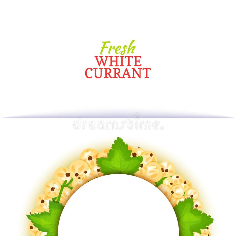 Halve cirkel gekleurd die kader uit heerlijk witte aalbesfruit wordt samengesteld Vectorkaartillustratie Halve witte aalbesbes royalty-vrije illustratie