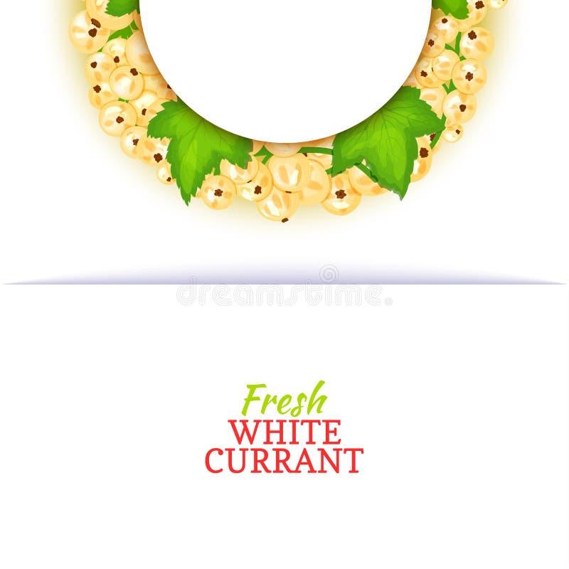 Halve cirkel gekleurd die kader uit heerlijk witte aalbesfruit wordt samengesteld Vectorkaartillustratie Halve witte aalbesbes vector illustratie