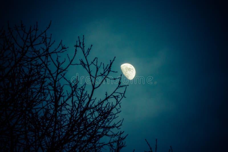 Halve maan over de boombovenkanten van de de winterpijnboom stock afbeeldingen