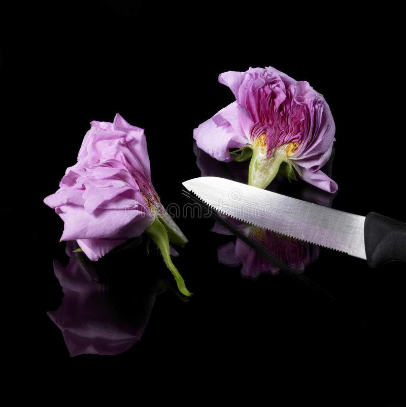 Halved rose and knife