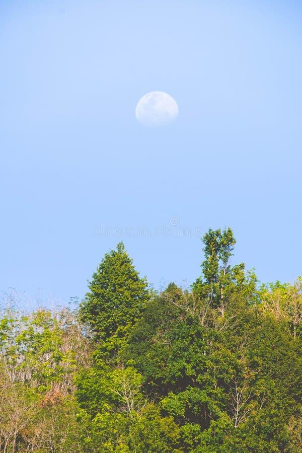 Halvmåne över berget i tropisk skog arkivfoto