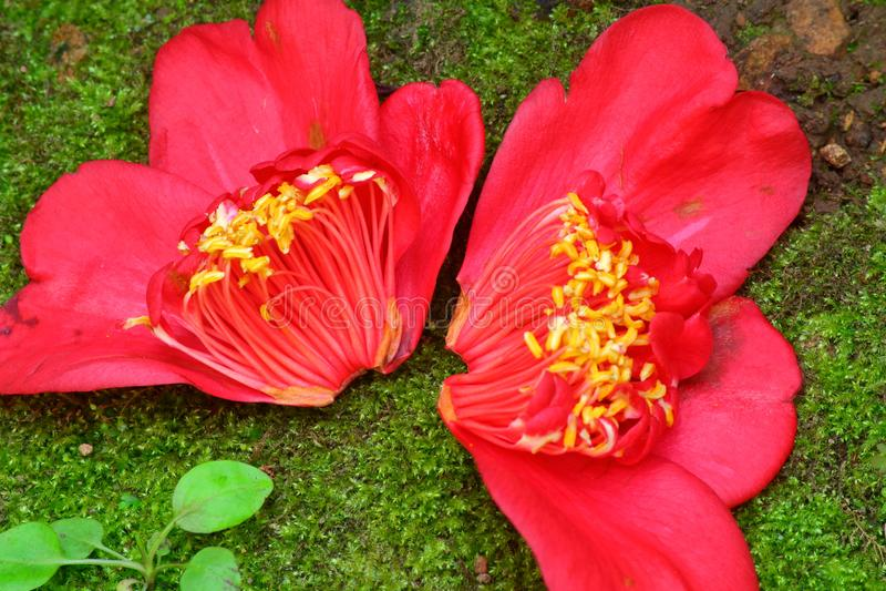Halvt - delad blomma royaltyfria foton