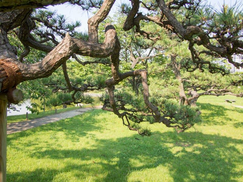 Beautiful Hama Rikyu Garden, Tokyo, Japan. Hama Rikyu 浜離宮, Hama Rikyū, is a large, attractive landscape garden in central Tokyo. Located stock image