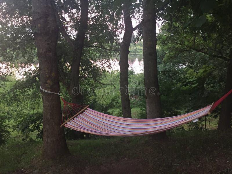 Hamac attaché à un arbre sur la berge images libres de droits
