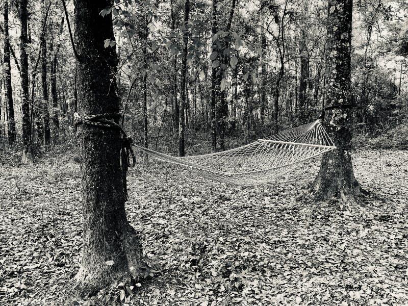 Hamac dans les bois images stock