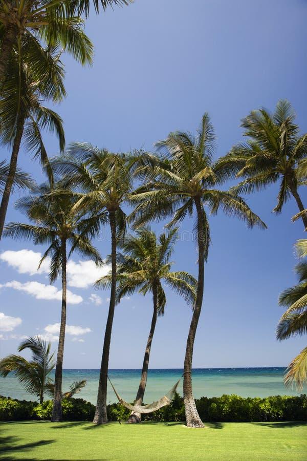 Hamac sur des palmiers. photographie stock libre de droits