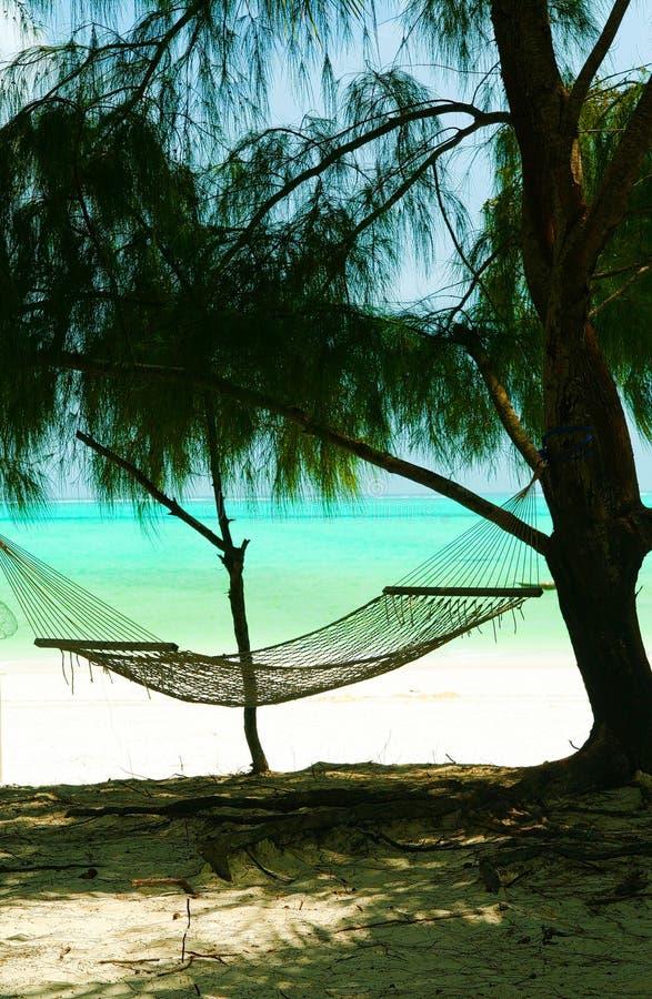 Hamac vide d'isolement entre les arbres de conifère, le sable blanc et le fond vert d'océan de turquoise - plage de Paje, Zanziba photos libres de droits