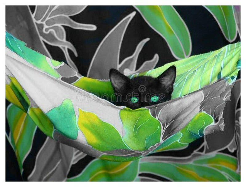 Download Hamaca imagen de archivo. Imagen de ojos, negro, pets, selectivo - 176997