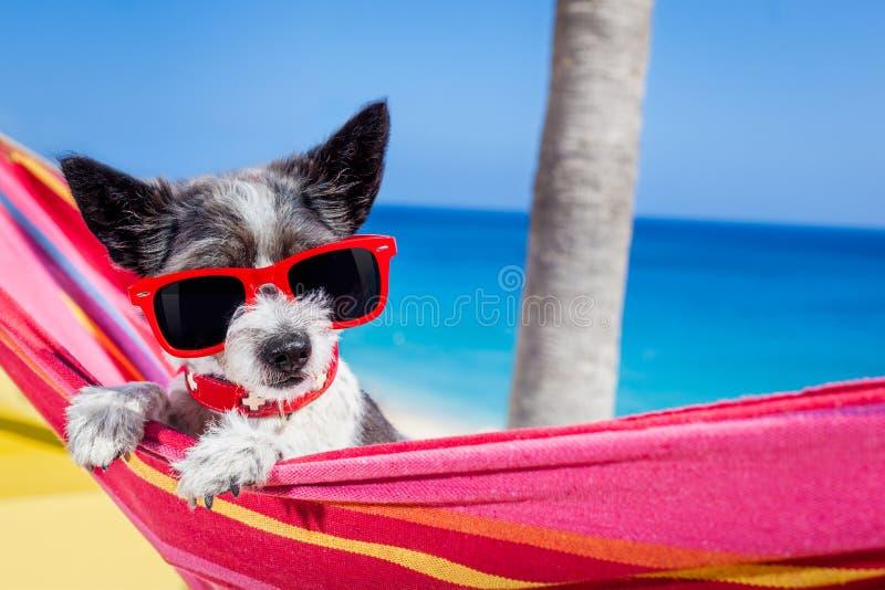 Hamaca del verano del perro imagenes de archivo