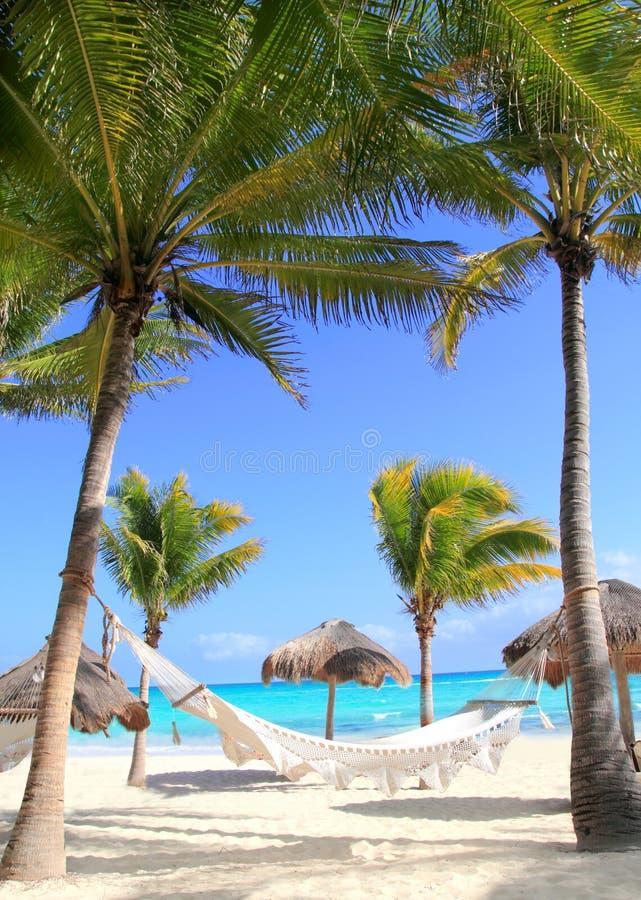 Hamaca y palmeras del caribe de la playa imagen de archivo - Hamacas de playa ...
