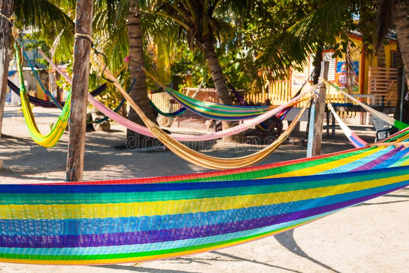 Hamacas coloreadas multi que cuelgan en las palmeras tropicales imagenes de archivo