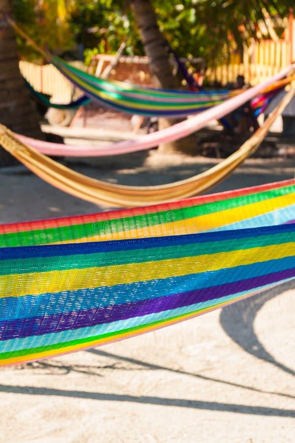 Hamacas coloreadas multi que cuelgan en las palmeras tropicales imagen de archivo libre de regalías