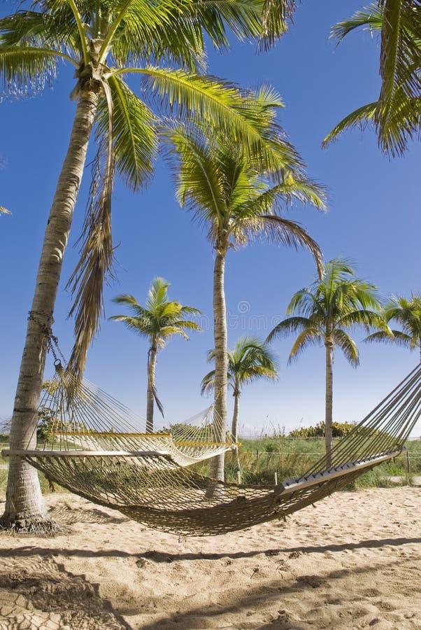 Hamacs dans un paradis tropical photo stock