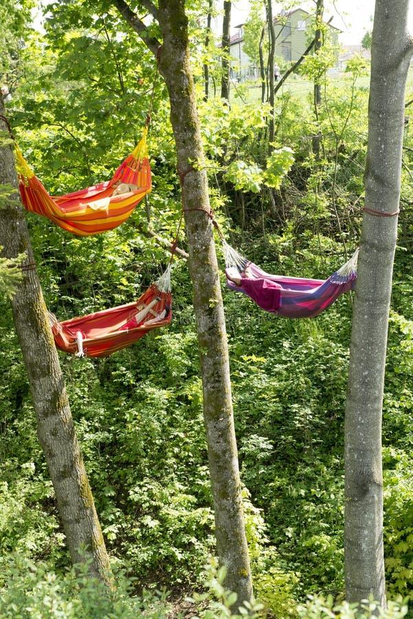 Hamacs entre les arbres images stock