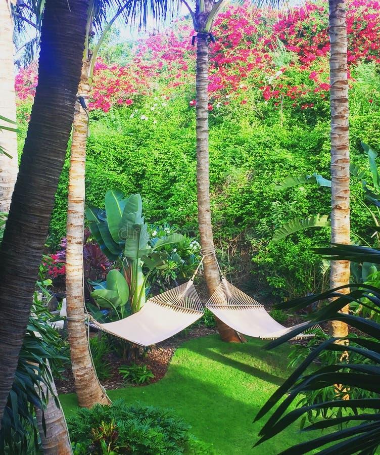 Hamacs station de vacances de quatre saisons, Lanai photographie stock libre de droits