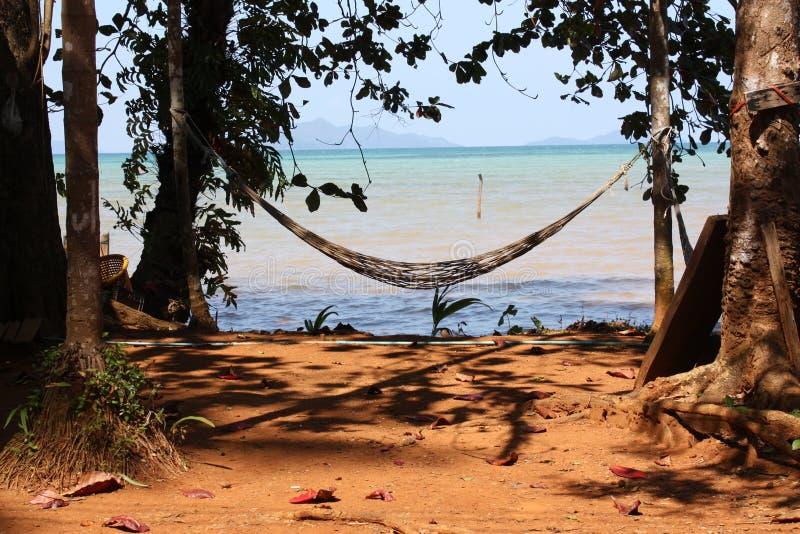 hamaków palmtrees fotografia stock