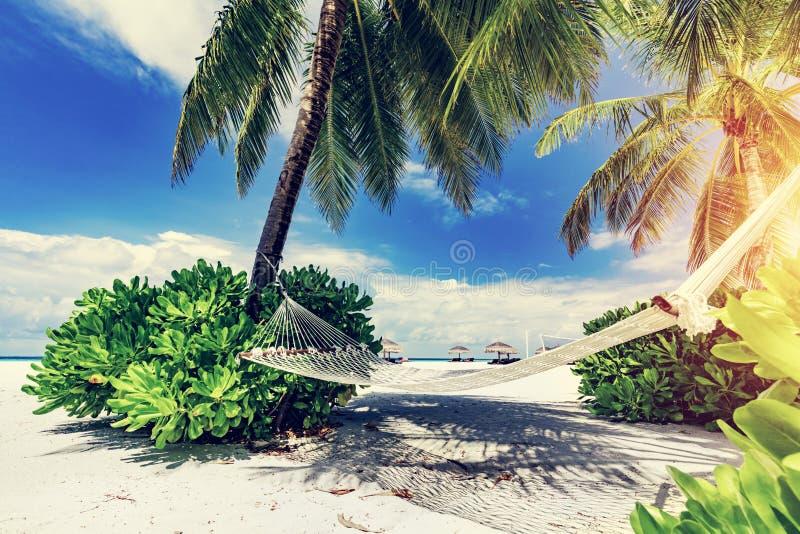 Hamak i palmy na plaży zdjęcia royalty free