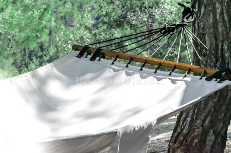 Hamaka obwieszenie na sosnowym baga?niku w lato lasu krajobrazu tle fotografia royalty free