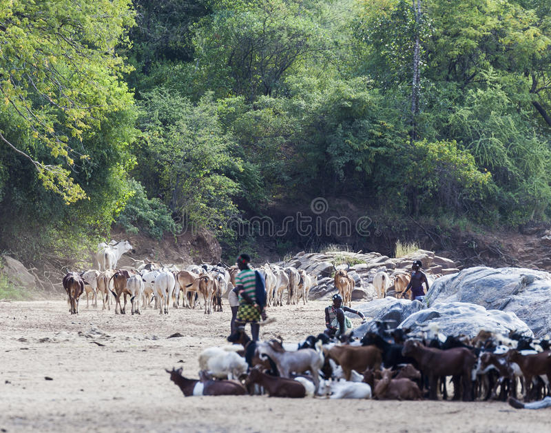 Hamar shepherds with their herd in a dry river bed. royalty free stock images