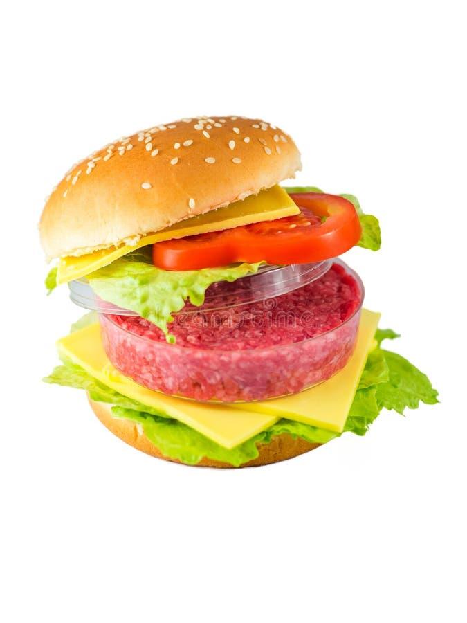 Hamburger z mięsem w Petri naczyniu reprezentuje Vitro mięso obraz royalty free