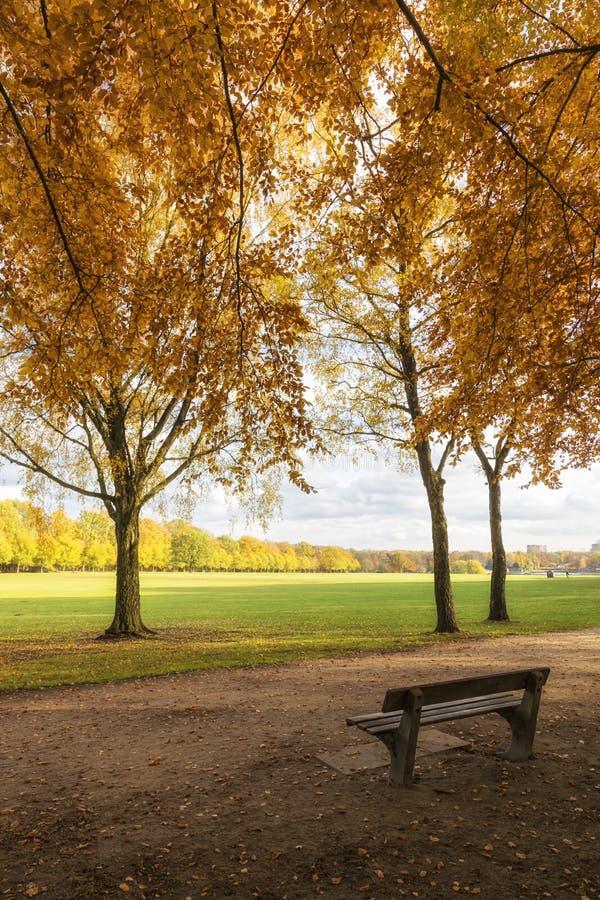 Hamburgo, Stadtpark en otoño fotografía de archivo