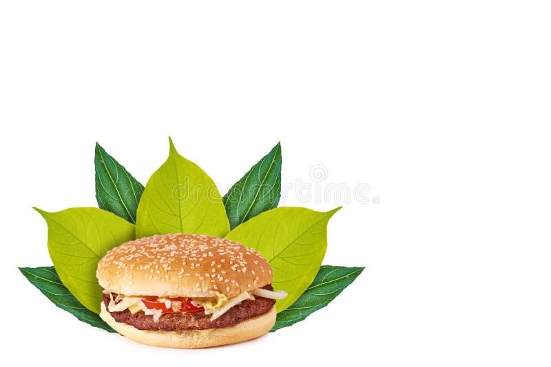 Hamburguesa sabrosa fresca con queso en el fondo de hojas verdes Aislado en blanco noción del origen natural imagen de archivo