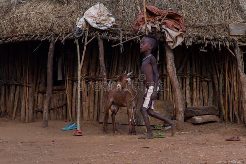 Hamer Tribe-jongen en een geit stock foto's