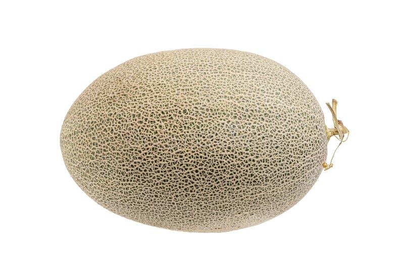 Hamigua melon sweet cantaloupe melon isolated on white backgro. Und stock image