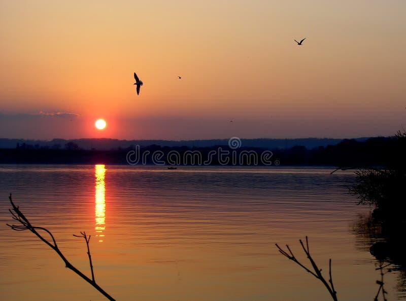 Download Hamilton Bay stock image. Image of bird, biology, sunset - 162397
