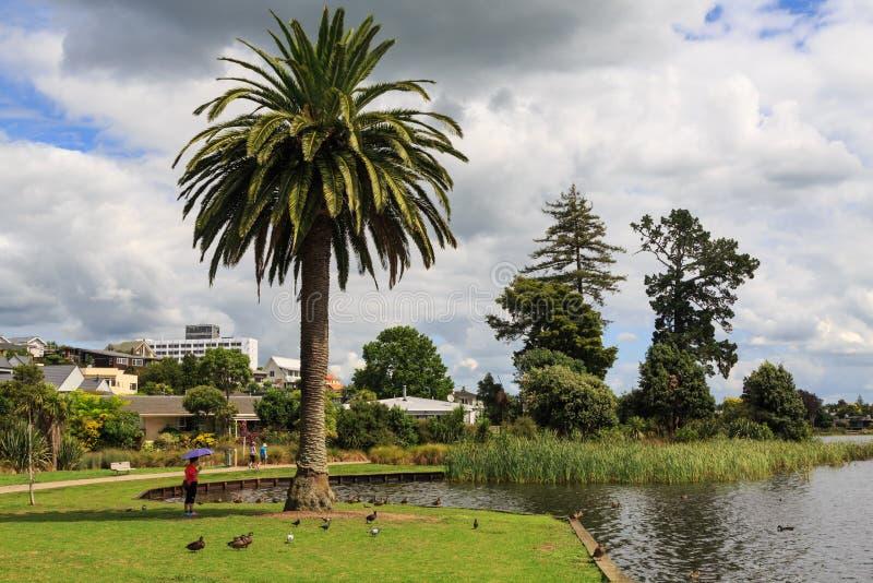 Hamilton Nya Zeeland Träd runt om sjön Rotoroa royaltyfri fotografi