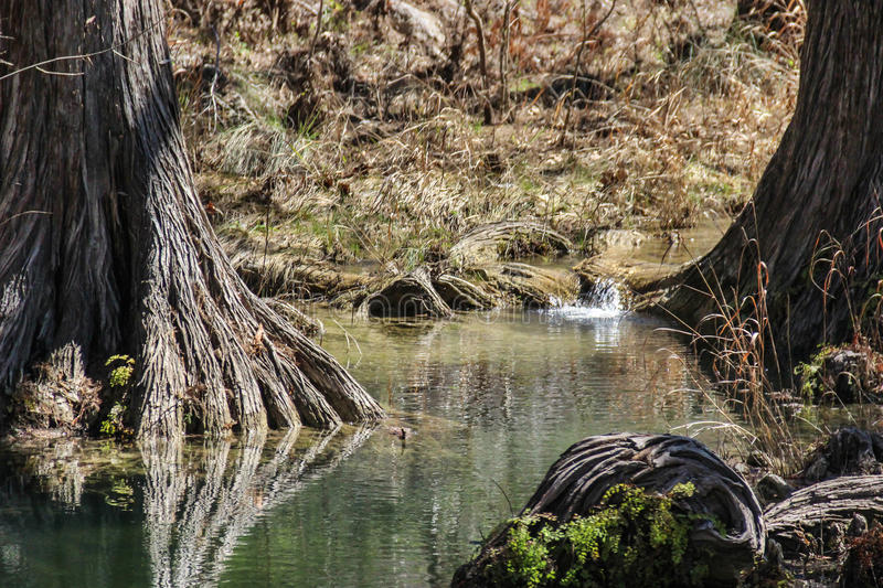 Hamilton Pool Texas Hill Country royaltyfri foto