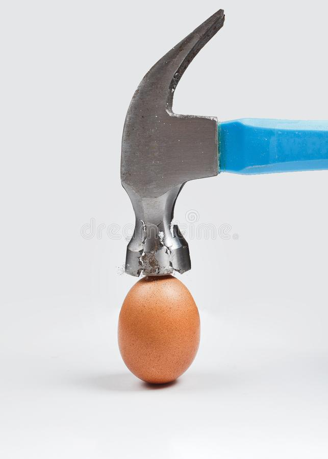 Hammer is breaking chicken egg. Concept of strength, durability, stress resistance, fortitude stock photography