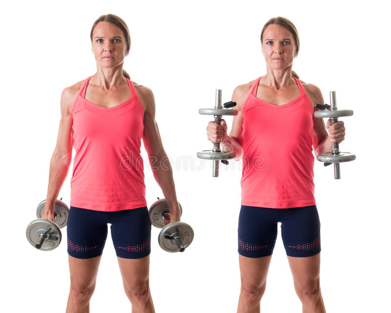 Hammer Curl. Exercise. Studio shot over white royalty free stock photos