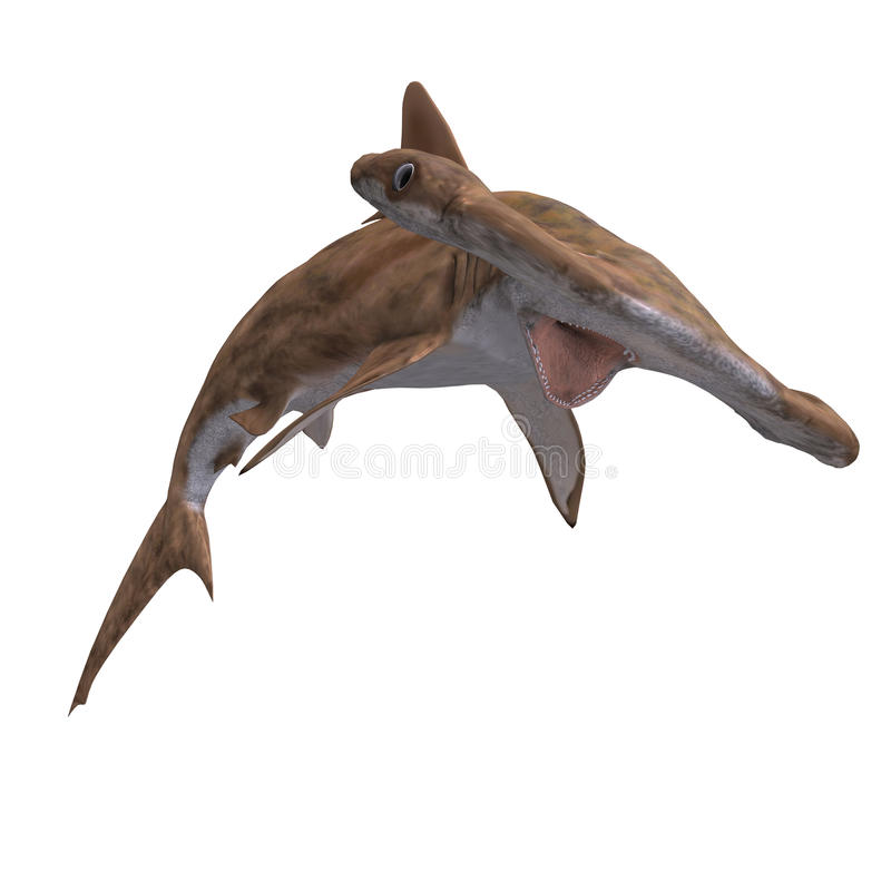 hammerhead καρχαρίας ελεύθερη απεικόνιση δικαιώματος