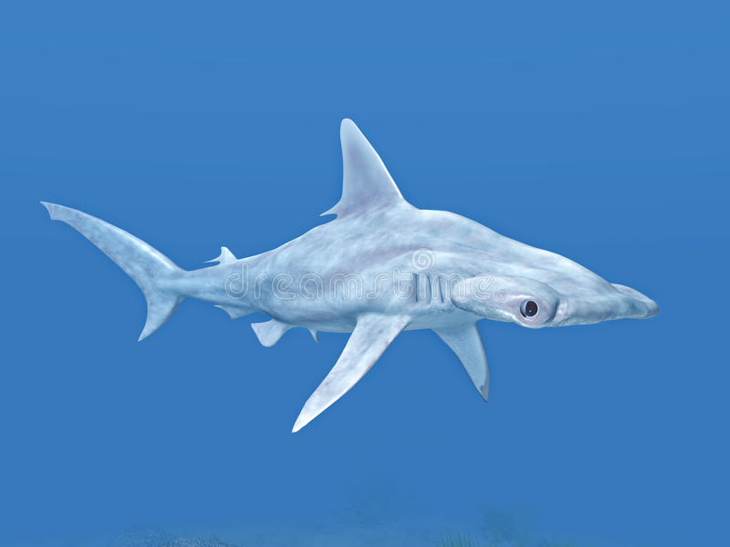 Download Hammerhead stock illustration. Image of fish, water, shark - 26561255