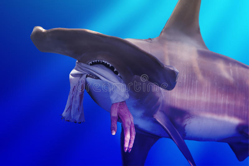 Download Hammerhead Shark With Hand Stock Images - Image: 29032904