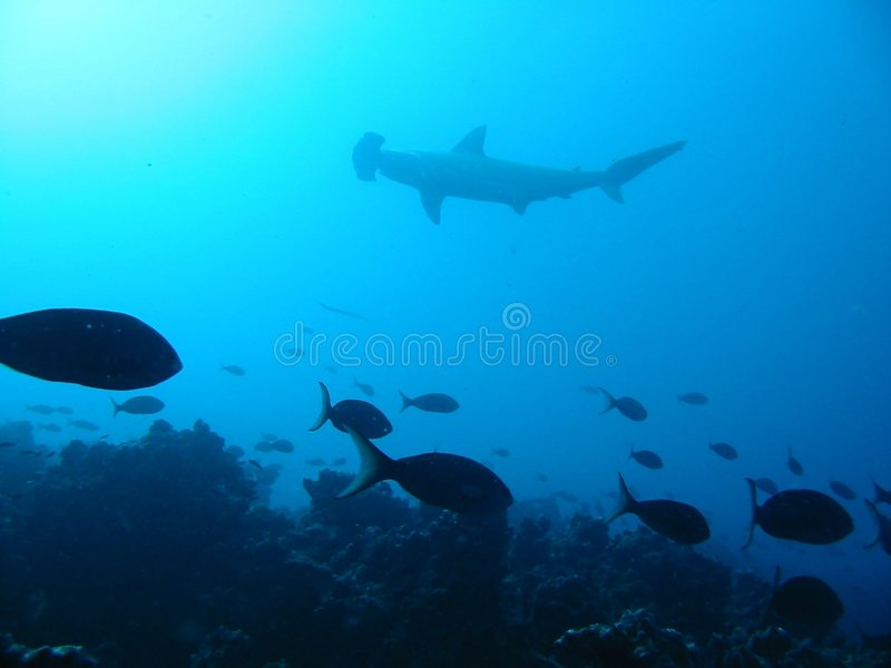 Download Hammerhead Shark Silhoutte stock photo. Image of distance - 8915100