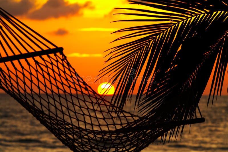 hammock заход солнца ладони стоковые изображения