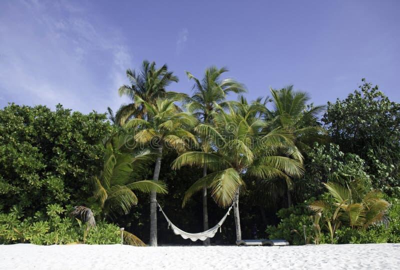 Hammock em uma praia tropical, Maldives fotografia de stock