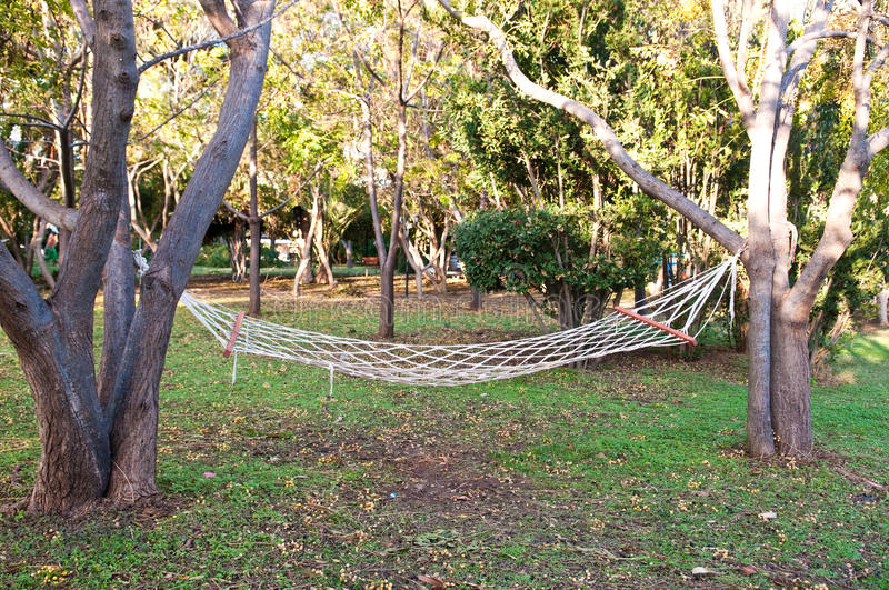 Download Hammock in forest stock photo. Image of human, beautiful - 14445354