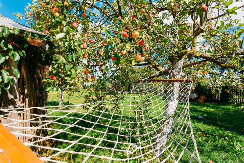 Hammock Hanging Under Apple Tree With Red Apples In Yard Of The Rural House. Strung Hammock Hanging Under Apple Tree With Red Apples In Rest Zone Of Yard Of The royalty free stock photos